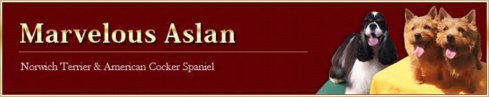 Marvelous Aslan